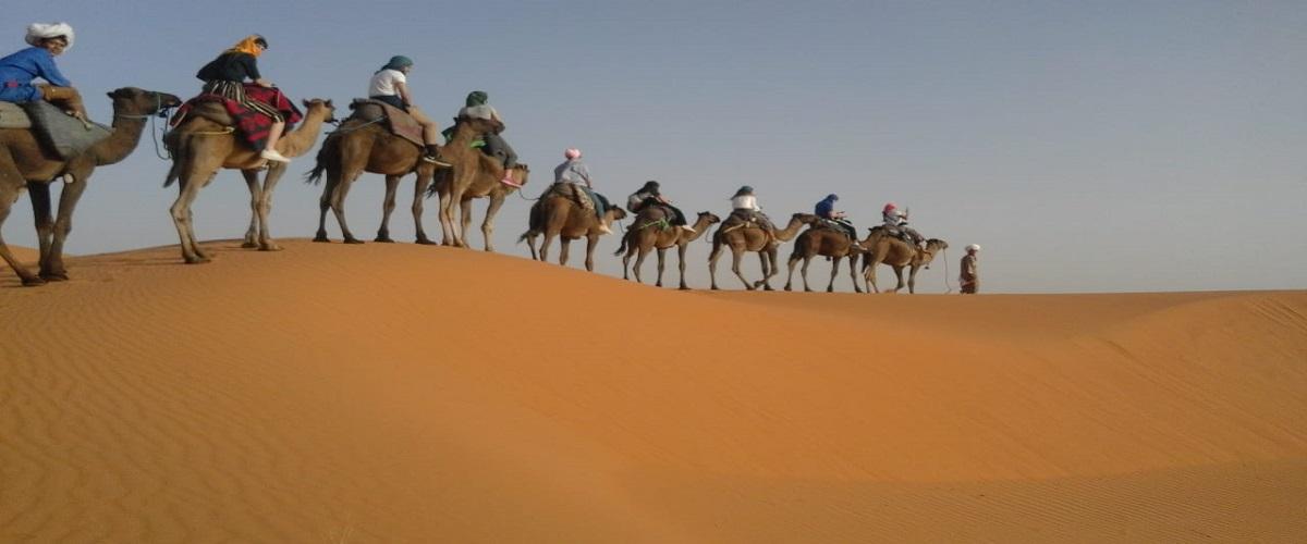 camel merzouga